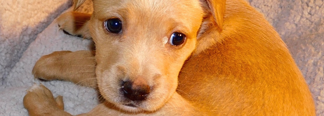 Looking to adopt a pet? Here are 6 precious puppies to adopt now in Tampa