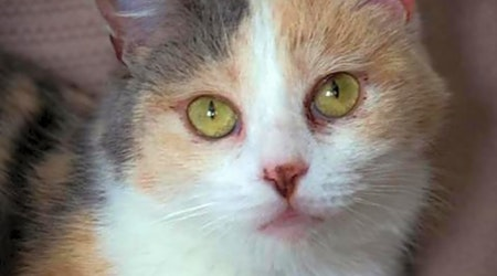 These Saint Paul-based felines are up for adoption and in need of a good home