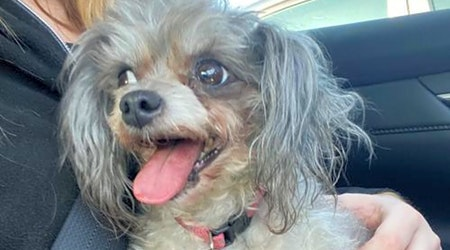Want to adopt a pet? Here are 7 lovable pups to adopt now in St. Louis
