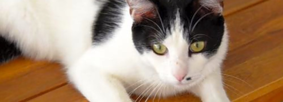 5 lovable kitties to adopt now in San Jose
