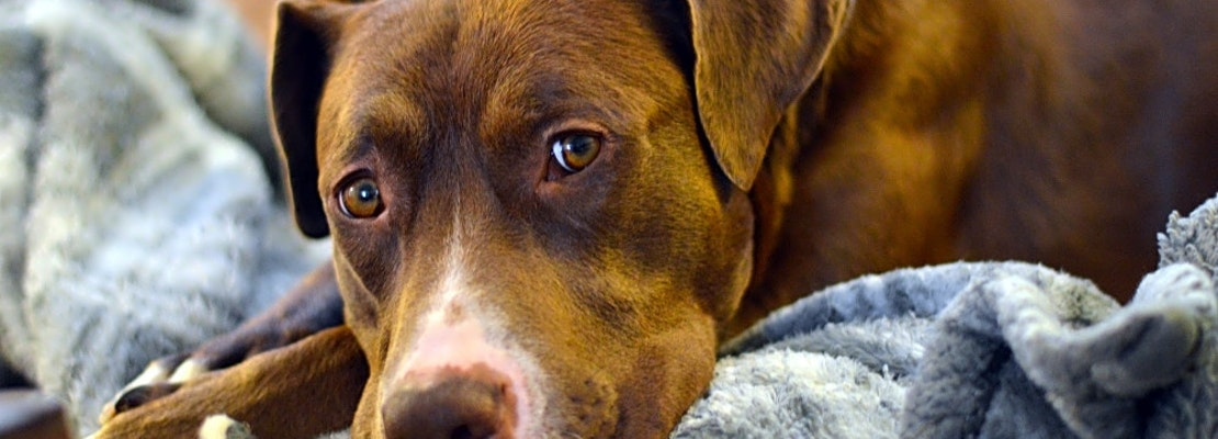 6 lovable pups to adopt now in Seattle