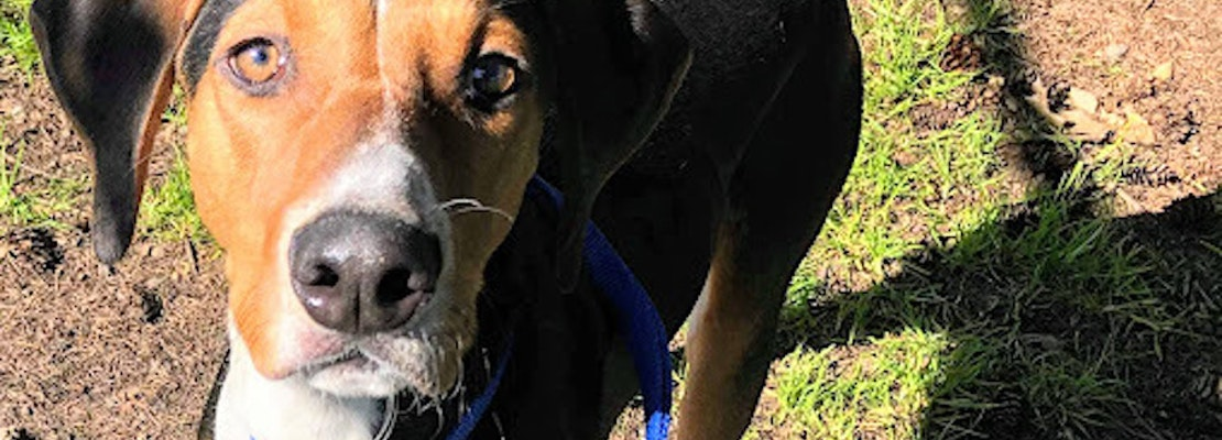 Want to adopt a pet? Here are 6 cuddly canines to adopt now in Portland