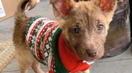 Looking to adopt a pet? Here are 3 precious puppies to adopt now in New York City