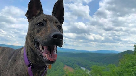 Looking to adopt a pet? Here are 5 lovable pups to adopt now in Baltimore