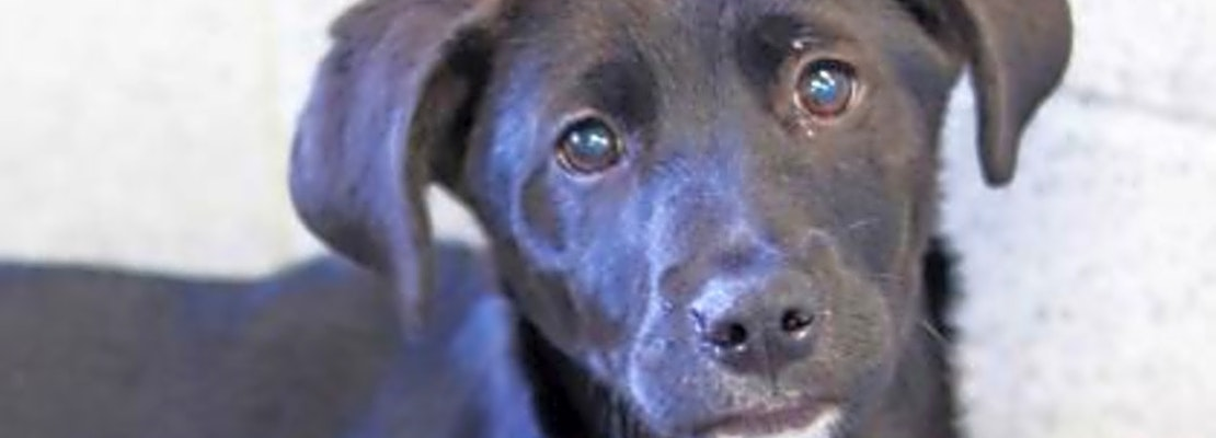 Want to adopt a pet? Here are 6 perfect puppies to adopt now in Atlanta