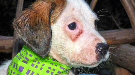 These Jacksonville-based puppies are up for adoption and in need of a good home