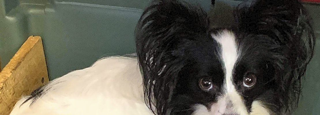 These Orlando-based dogs are up for adoption and in need of a good home