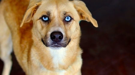 Looking to adopt a pet? Here are 7 lovable pups to adopt now in San Antonio
