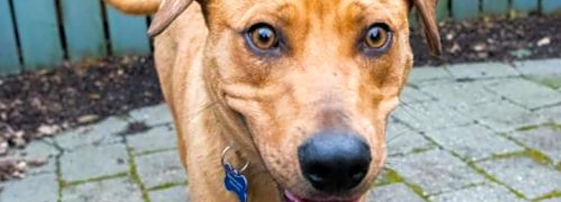 These Seattle-based dogs are up for adoption and in need of a good home