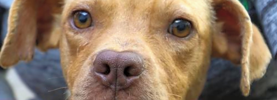 4 cuddly canines to adopt now in Washington