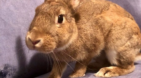 4 lovable rabbits to adopt now in Baltimore