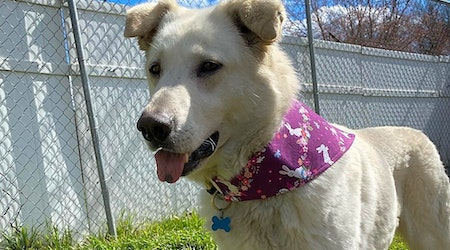Looking to adopt a pet? Here are 6 cuddly canines to adopt now in Charlotte