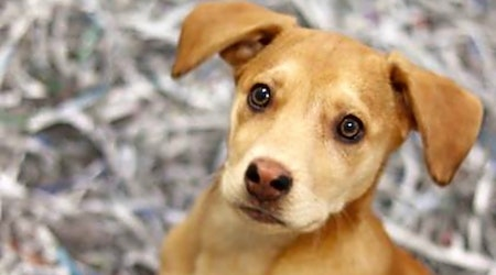 Looking to adopt a pet? Here are 5 perfect puppies to adopt now in Atlanta
