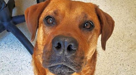 Looking to adopt a pet? Here are 3 cuddly canines to adopt now in Jacksonville