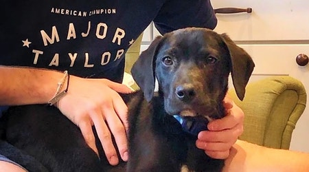 3 cuddly canines to adopt now in Indianapolis