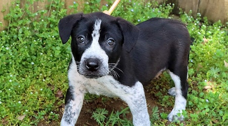 These Nashville-based puppies are up for adoption and in need of a good home