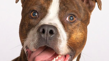 Looking to adopt a pet? Here are 6 cuddly canines to adopt now in Chicago