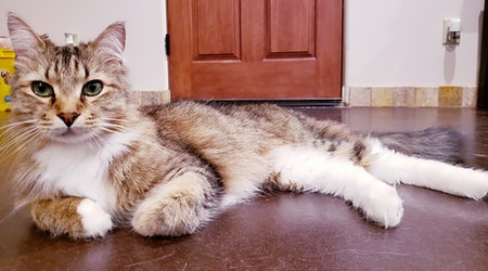 These Mesa-based cats are up for adoption and in need of a good home