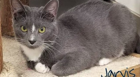 These Las Vegas-based felines are up for adoption and in need of a good home