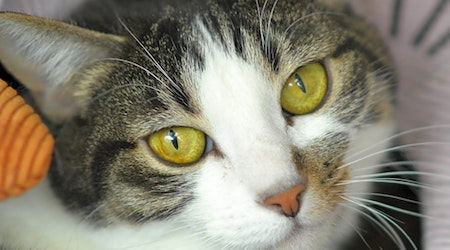 7 cool cats ready to adopt now in Denver