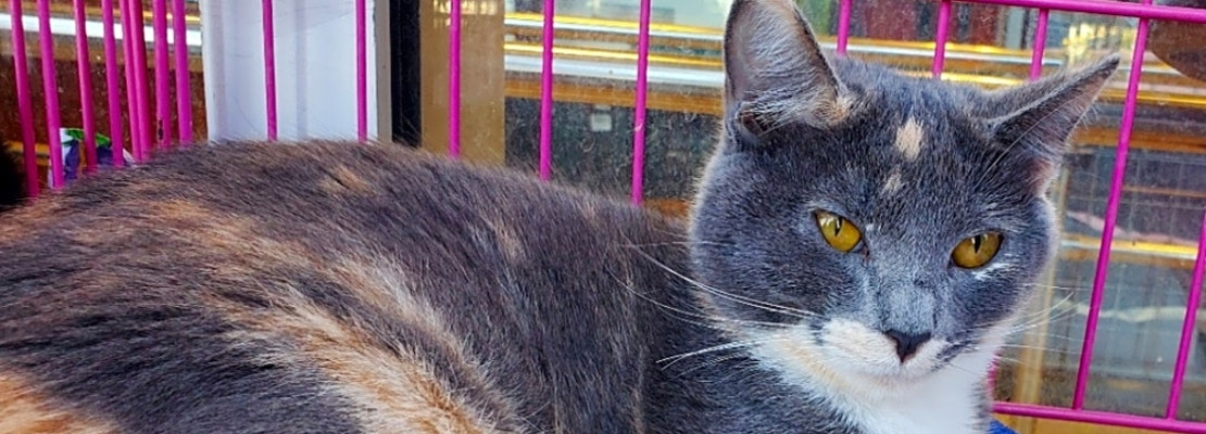 Want to adopt a pet? Here are 7 furry felines to adopt now in Austin