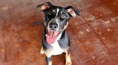 4 precious puppies to adopt now in San Antonio
