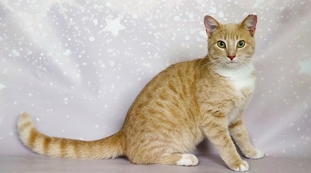 These Orlando-based kitties are up for adoption and in need of a good home