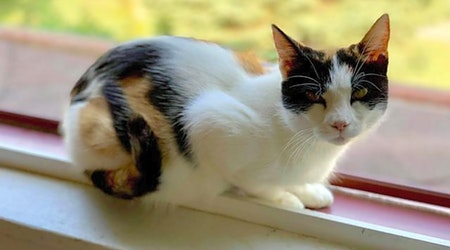Want to adopt a pet? Here are 5 cute kitties to adopt now in Pittsburgh