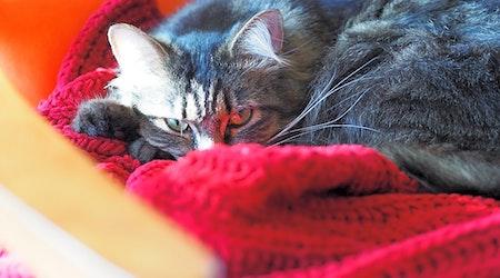 4 lovable kitties to adopt now in Minneapolis