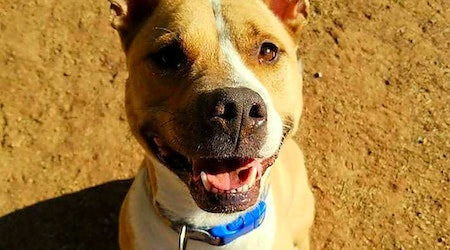 These Phoenix-based canines are up for adoption and in need of a good home