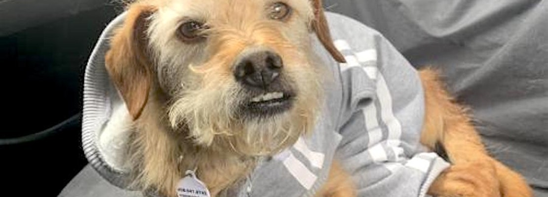 These San Jose-based canines are up for adoption and in need of a good home
