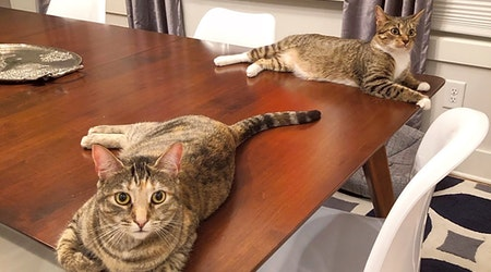 Want to adopt a pet? Here are 6 cool kitties to adopt now in Nashville