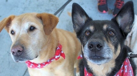 Looking to adopt a pet? Here are 5 cuddly canines to adopt now in Atlanta