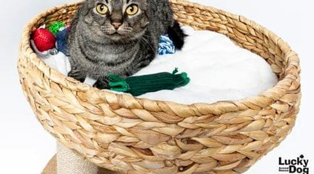 These Washington-based felines are up for adoption and in need of a good home