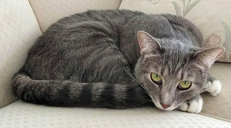 Looking to adopt a pet? Here are 7 cute kitties to adopt now in Phoenix