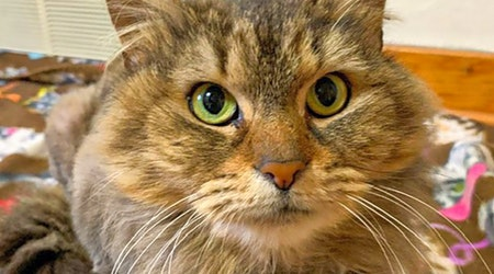 Want to adopt a pet? Here are 4 charming cats to adopt now in Pittsburgh