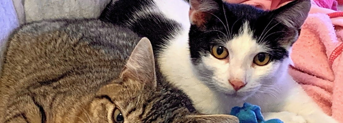 Want to adopt a pet? Here are 7 cool kitties to adopt now in San Jose