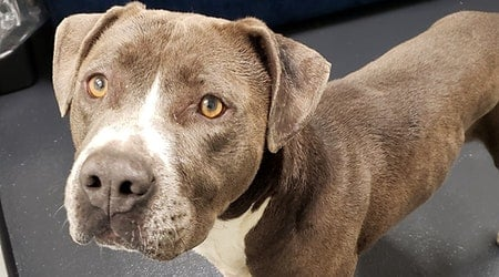 Want to adopt a pet? Here are 4 delightful doggies to adopt now in Portland