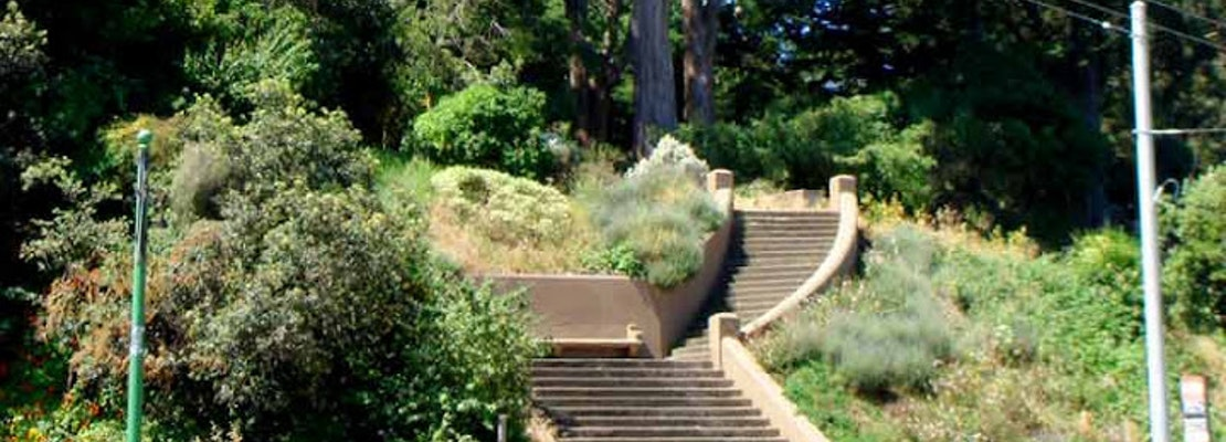Park Patrons Warned Away After Dog Attack Reported In Buena Vista Park