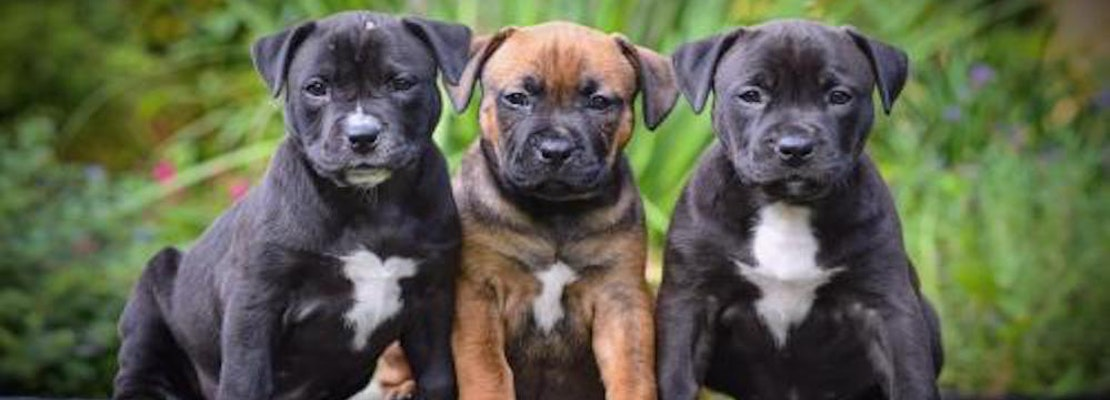3 perfect pups to adopt now in Tampa