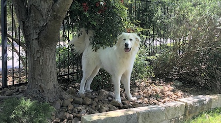 7 cuddly canines to adopt now in San Antonio