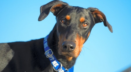 Looking to adopt a pet? Here are 7 delightful doggies to adopt now in Phoenix