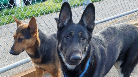 Looking to adopt a pet? Here are 4 lovable pups to adopt now in Portland