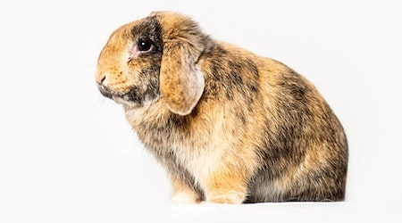 These Seattle-based rabbits are up for adoption and in need of a good home