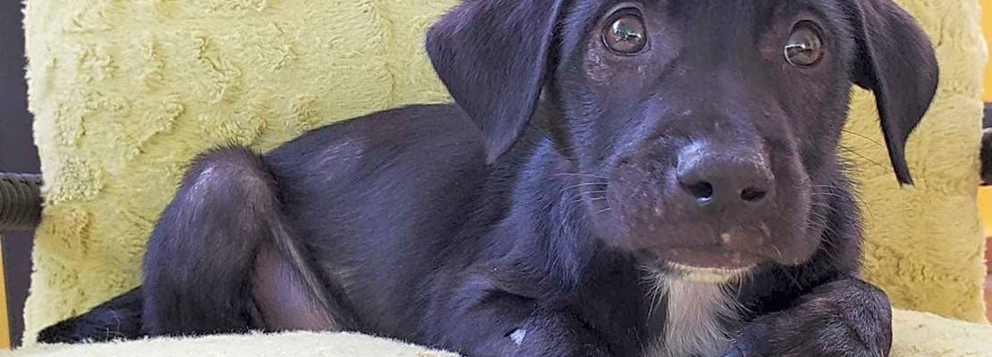 Want to adopt a pet? Here are 3 perfect puppies to adopt now in New York City
