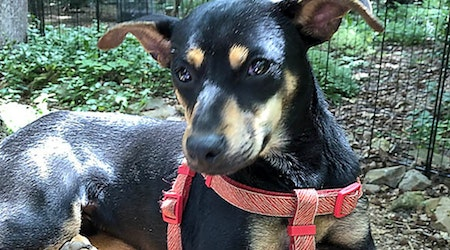 7 cuddly canines to adopt now in Durham