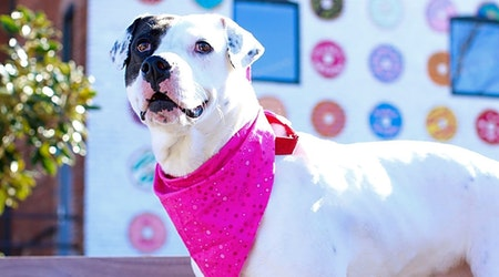These Charlotte-based dogs are up for adoption and in need of a good home