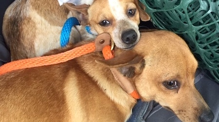 These Austin-based canines are up for adoption and in need of a good home