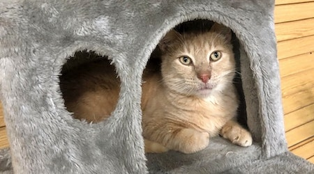 Looking to adopt a pet? Here are 6 cute kitties to adopt now in Nashville