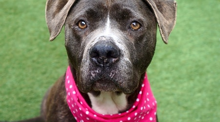 Want to adopt a pet? Here are 6 lovable pups to adopt now in New York City